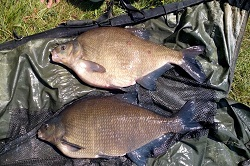 Brace of bream at 9lb and 10lb