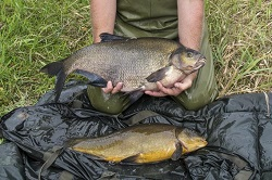 Keith with a 10lb Bream and a 6lb Tench